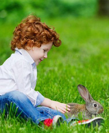 Just like getting a dog or cat is a big decision, the same rules apply for bringing home a bunny.