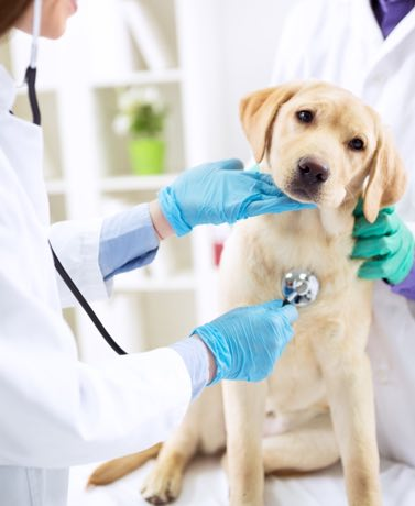 We know its important to take our pets to the vet. But its also a good idea to have a first aid kit