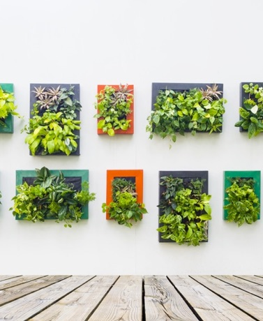 Spring Sprouting: Ideas For Vertical Gardens