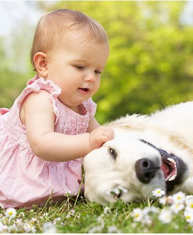 Its hard to tell how your dog will react to your new baby. But there are several methods to help