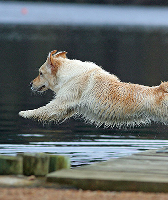 Even if dock jumping isnt the most esteemed dog sport, almost anyone would agree that its the most