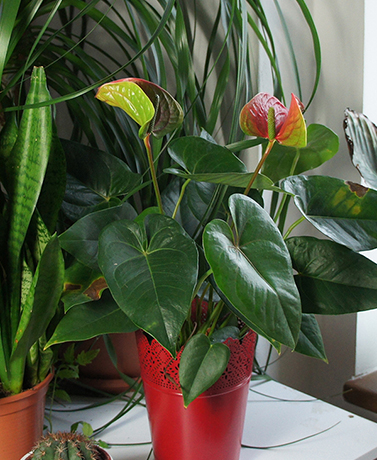 The trick to keeping indoor plants happy and healthy is to pay attention to their basic needs. Get