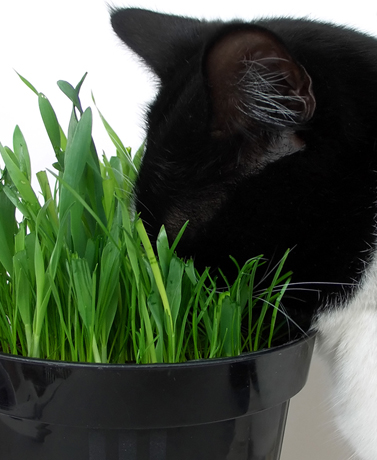 There are several types of common plants pets shouldnt eat. Before bringing your garden inside,