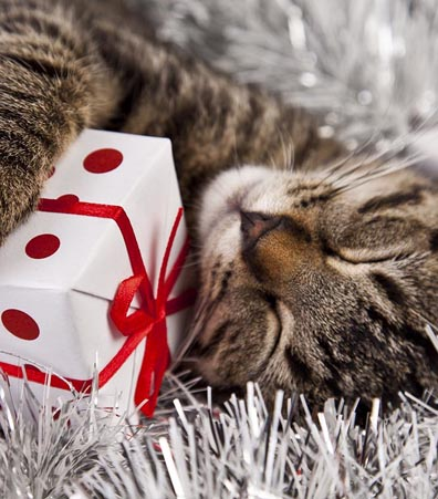 Preparing for a holly, jolly and pet safe holiday season is quite a challenge. Your beloved furball