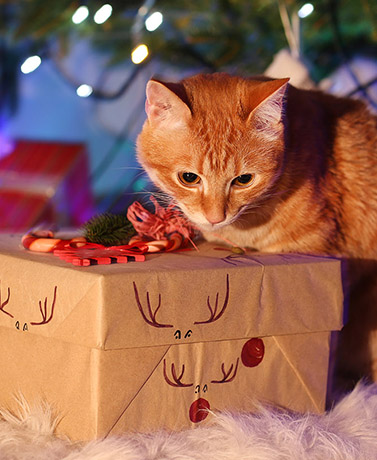 If youre looking for the perfect gift to make your pets Christmas extra special this year, read on