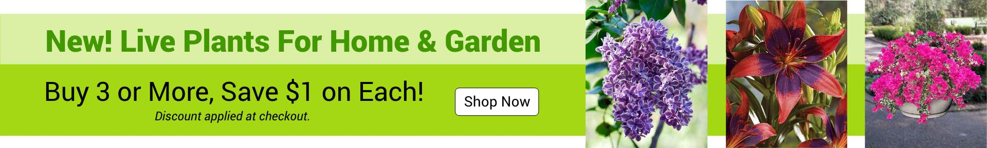 Live Plants For Home & Garden Shop Now