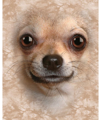 Chihuahua Cozy Fleece Throw