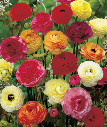 50-Pack Easy-to-Grow Bulbs