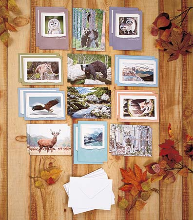 72-Pc. All-Occasion Wildlife Greeting Card Set