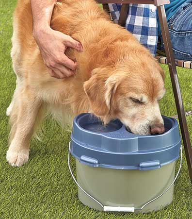 Omega Paw� Top Dog Lunch Box