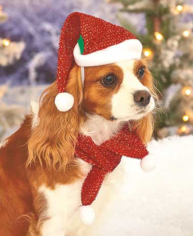 Glittery Pet Holiday Scarf and Hat