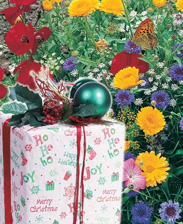 Holiday Seeded Gift Wrap