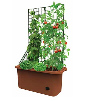 Mobile Vegetable Patch