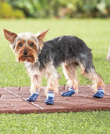Water-Resistant Outdoor Dog Socks