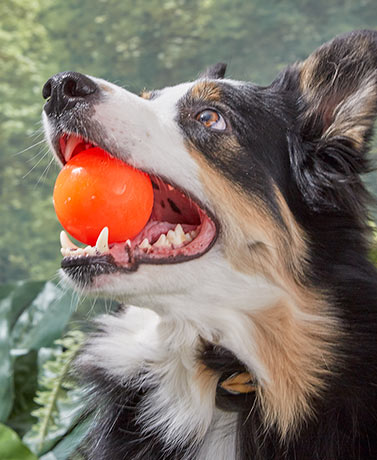 Ruff Dawg™ Indestructable Rubber Balls