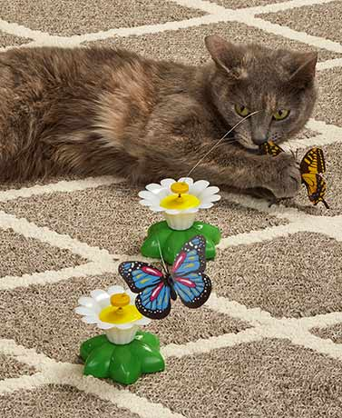 Set of 2 Fluttering Butterfly Cat Toys