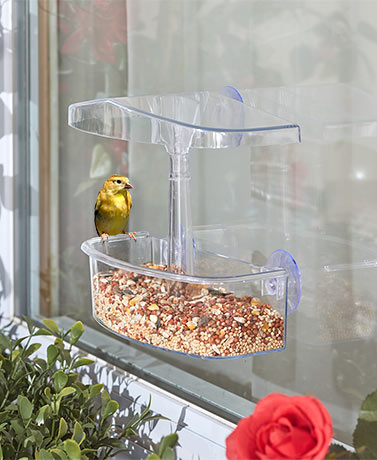 Window Bird Buffet